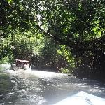 the mangroves from the jeep trip