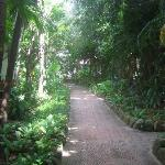 Pathway through the grounds