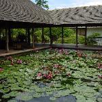 Lobby lily pond