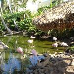 flamingos...take bread to feed them, the loved it