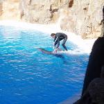 Dolphins in Loro Parque