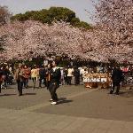 Cherry blossom sightseers