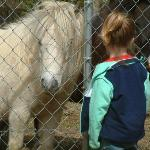 Miniature Horses at the neighboring meadow.