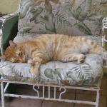 Homer the Hotel Cat