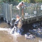 St. Augustine Alligator Farm Zoological Park Photo
