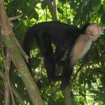 This was the closest we got to the Monkeys (Close enough!)