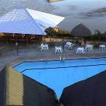 pool at La casa del suizo