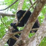 Howler monkey outside room, will wake you up at 5am guaranteed!