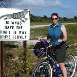 Iguanas have right of way. Seriously.