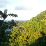 Ocean and Trees (View #2 from Villa)