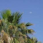 Moon Rise Over Palms