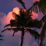 Sunset and sky and palm
