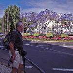 Funchal Rotunda Infante Flower trees