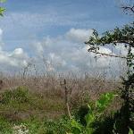 Jungle Damage