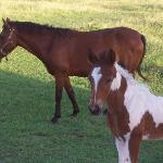 Mary and Hector's horses