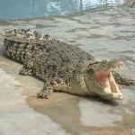 Langkawi crocodile farm