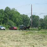 An Amish buggy seen from the B&B's front yard