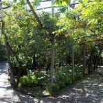 You walk through a lemon grove to get to the Villa