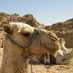 Camel Ride, Great Fun, take drinking water!!