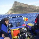 Diving at Cape Town