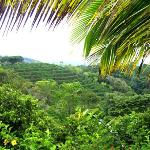 Coffee plantation view