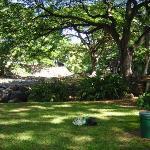 Lili'uokalani Botanical Garden Photo