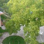 garden from balcony (pool behind tree, believe me)