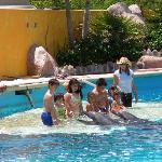 Kids dolphin experience