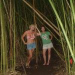 Bamboo Forest Foto