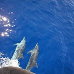 Dolphins seen from the Santa Maria (a must if you visit Funchal)
