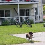 Our dog, enjoying his stay at The Country Inn at Camden-Rockport