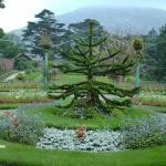 Also worth a visit - Kylemore Abbey walled garden
