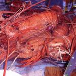Lobster brought direct from fish Monger in Fremantel