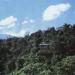 Foto de Rara Avis Rainforest Lodge & Reserve