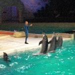Team Dolphins