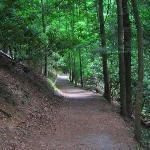 A walk beside a stream