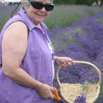 Anne cutting lavender at Mountain View Farm