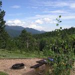 Site 42 conifer ridge