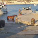 Horse in the harbour