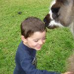 kissing llama