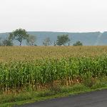 I'm not kidding about the corn field