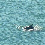 Lucky day with dophin sighted!