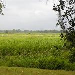 rice marsh at rear of property