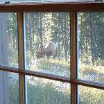 View of Elk out our Dunraven Lodge window