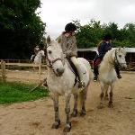 pretty highland ponies