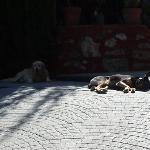hotel managers dogs in the shade