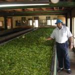 'Mr Jeremy' & The Tea Factory