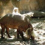 Gladys Porter Zoo Bild
