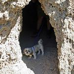 Shih Tzu cave dog dweller at Rifle Falls