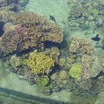 Coral at Dolphin Reef